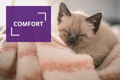 Comfort - kitten cuddling with a blanket